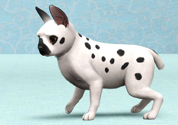 Sims 3 pets, bunny, dog