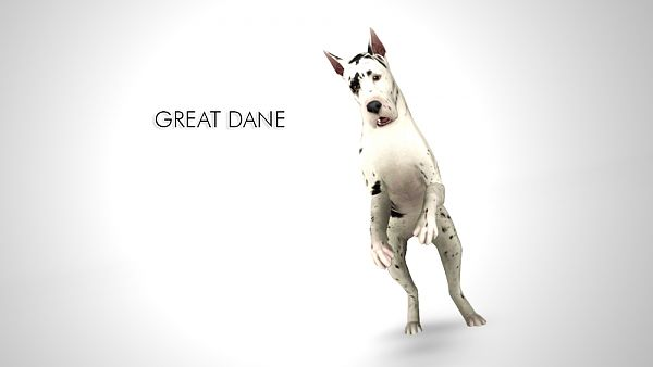 Sims 3 pet, pets, dog, Great Dane