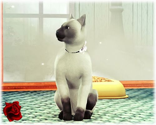 Sims 3 cat, pet, animals