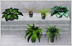 Sims 3 plant, flower, pot, decor, indoor, garden
